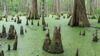 Swamp-5-3-_960px
